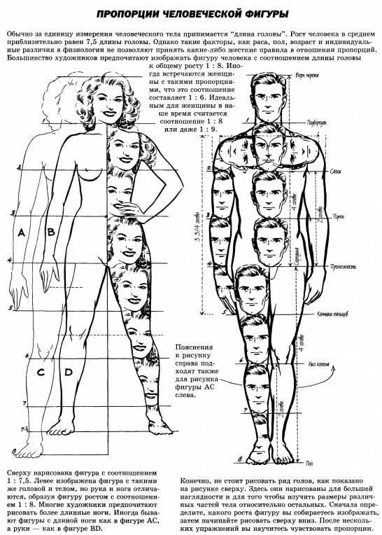 и тела человека - Рисунок
